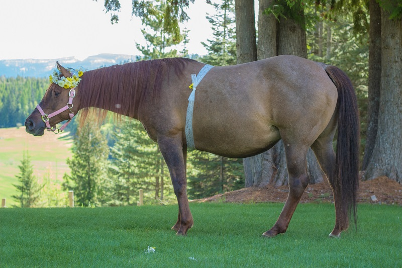 Ranch Rider My Western Foal Competition equestrian news